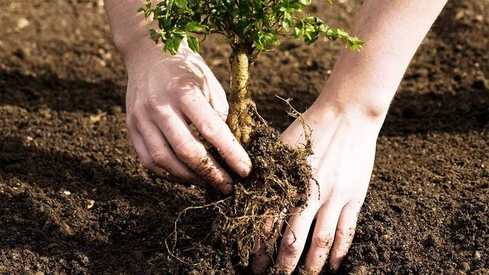 Children these days should not only be taught of planting trees, but about environment preservation.