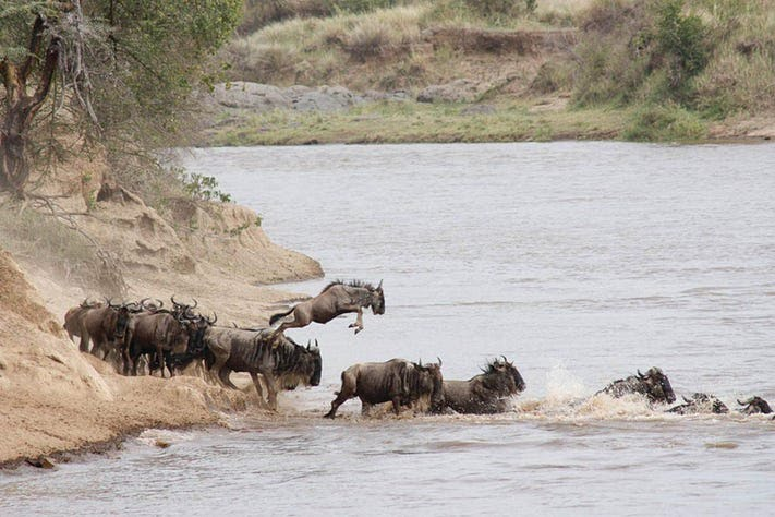 Wildebeest migration on safari with Tauck in Tanzania